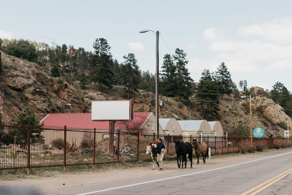 Horses on the side of the road in Evergreen Colorado