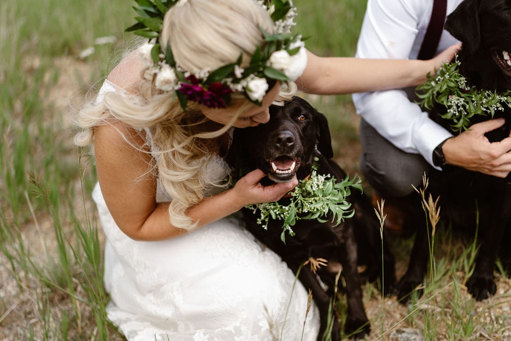 Bride her Dogs at their Breckenridge wedding