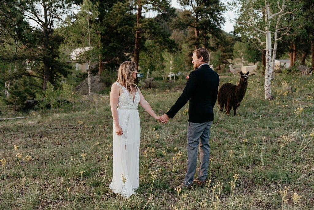 alpacas at your wedding or elopement