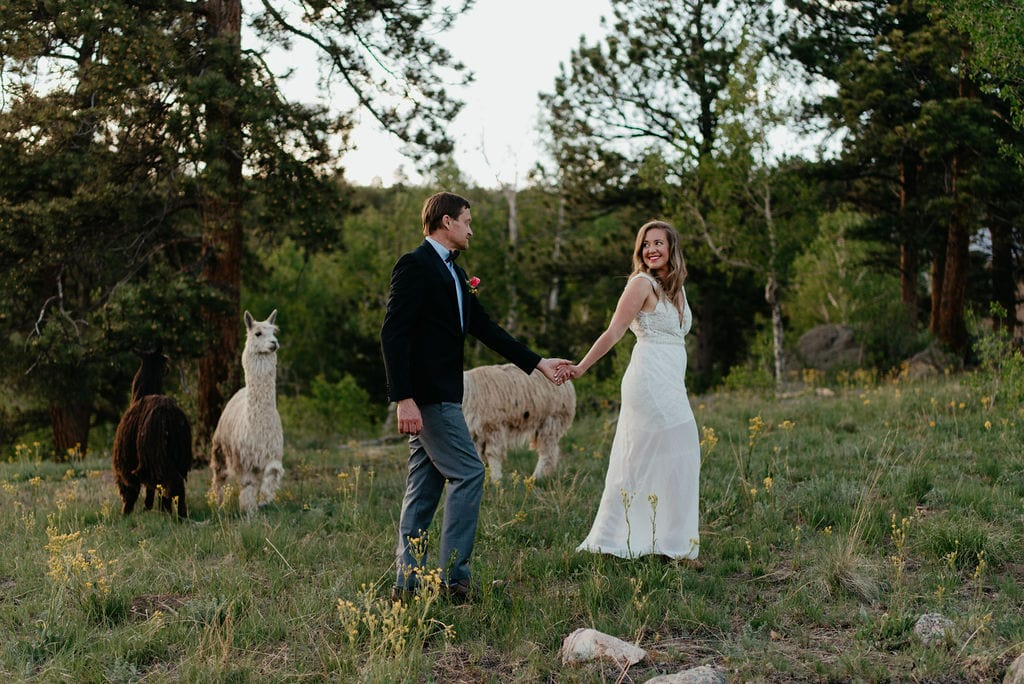 alpacas at your wedding or elopement