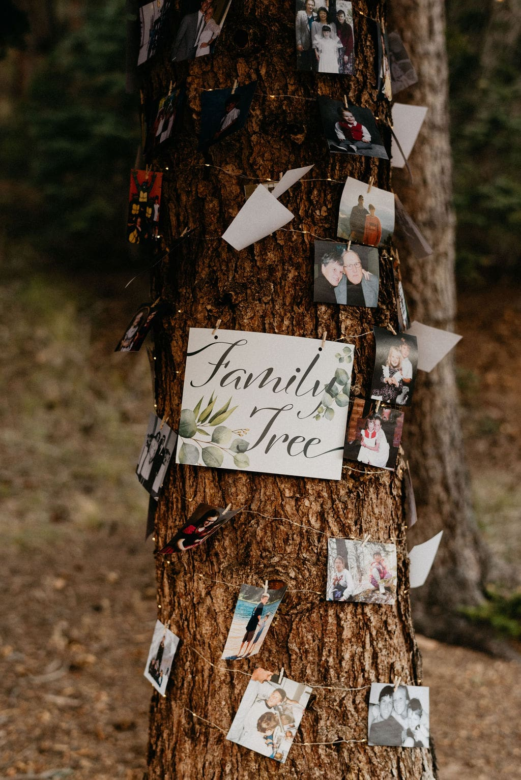 Family Tree with photos on it at wedding
